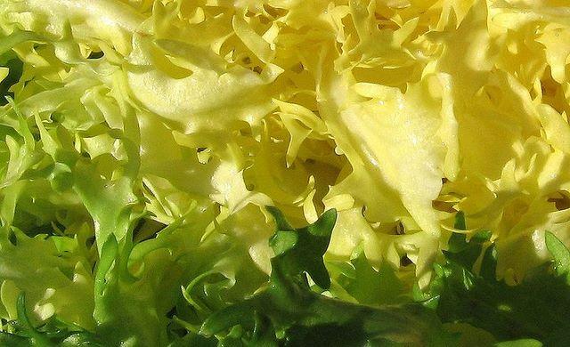 Scarola fresca e intatta adatta ad essere usata in varie ricette