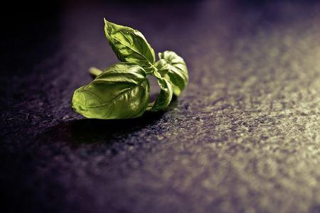 Bisogna raccogliere le foglie apicali del basilico con un po' di stelo