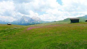 Prato dell'Alpe di Siusi