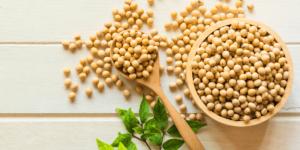 La soia bio apporta benefici all'organismo
