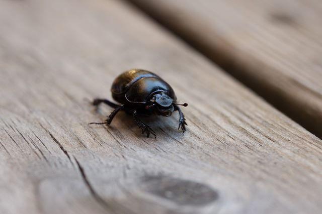 Come prevenire scarafaggi e blatte trucchi di casa - Da dove vengono gli scarafaggi in casa ...