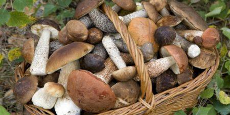 Funghi sani da fare essiccare