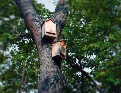 Casette per pipistrelli sistemate su un albero