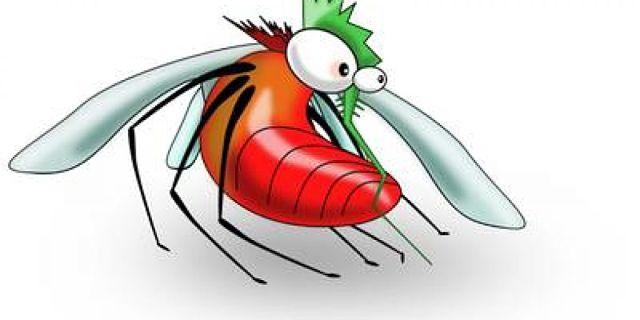 Vignetta di zanzara sazia di sangue