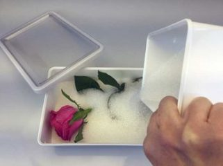 Come mettere ad essiccare una rosa nel gel di silice