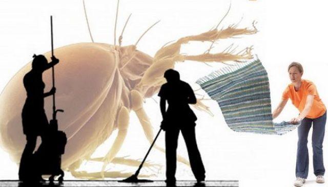 Igienizzare il pavimento e eliminare la polvere dai tappeti tendono lontani gli acari della polvere dalla casa