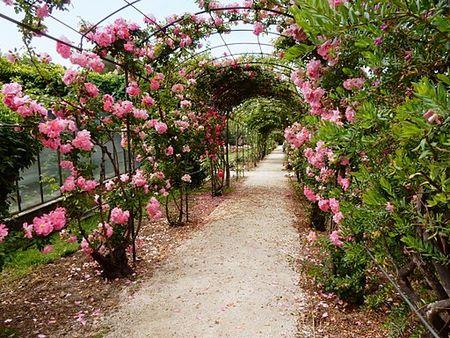 Tunnel di rose fiorite al Roseto dei parchi di Nervi