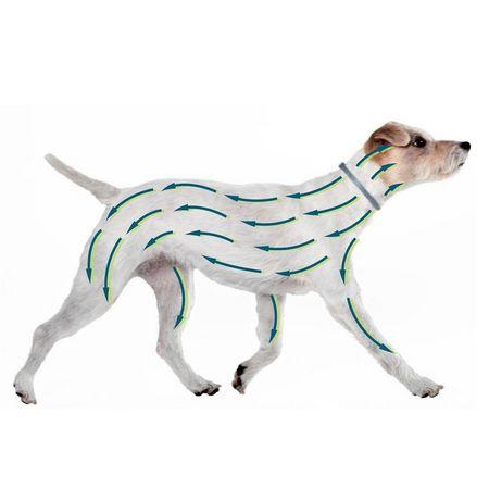 Parti del cane protette dal collare antiparassitario