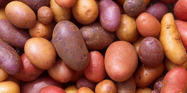 Varietà di patate adatte per preparare il succo curativo