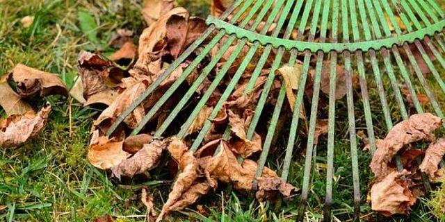 Un lavoro da fare nel giardino in autunnoè rastrellare le foglie morte