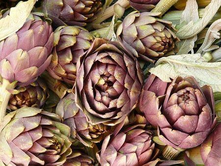 Carciofi varietà Violetto di Catania senza spine