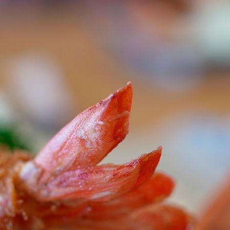 Coda di gambero fritto lasciata intatta