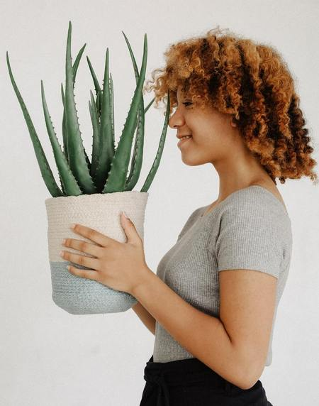 Donna tiene tra le mani una pianta di aloe in vaso
