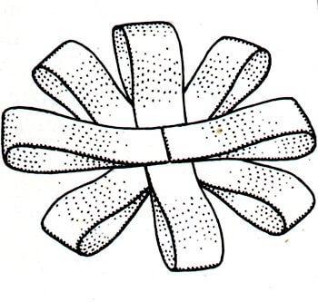 Immagine illustrativa della seconda fase della preparazione del fiocco a rosetta