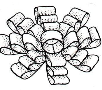 Immagine dell'assemblaggio finale del fiocco a rosetta