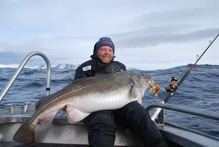 Merluzzo Gadus morhua appena pescato