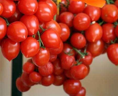 Aspetto dei pomodorini del Piennolo a grappolo del