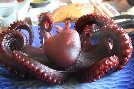 Polpo dai tentacoli con 2 file di ventose fatto bollire
