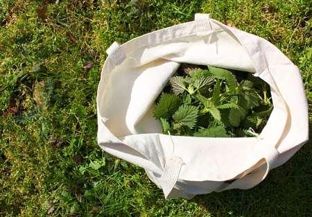 Ortica fresca e tenera nel sacchetto di stoffa