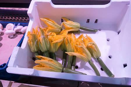 Zucchine con fiori aperti e freschi