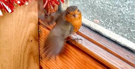 Uccello su infisso in legno